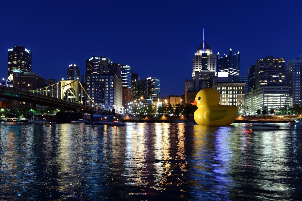 Duck on water Night time.jpg