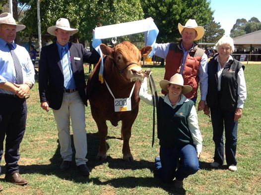 Longreach Hip-Hoorah Receiving Supreme Champion Limousin Canberra Royal 2014