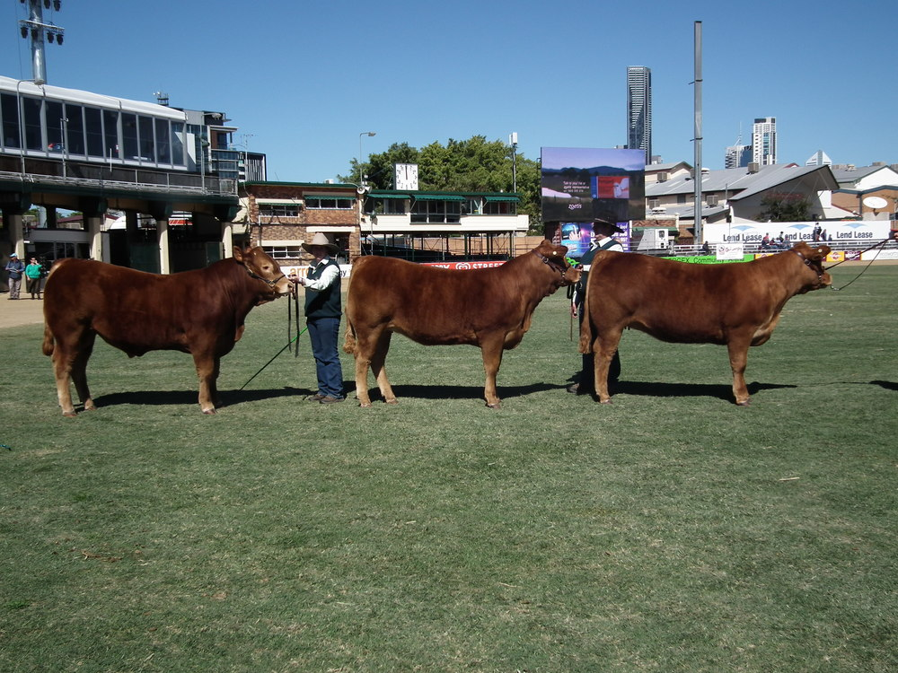 Breeders Group Brisbane Royal 2013