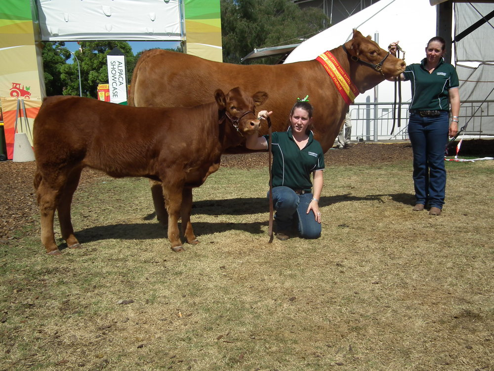 Donna Valley Maxine-Fleur, Reserve Senior Champion, Sydney Royal Show 2013