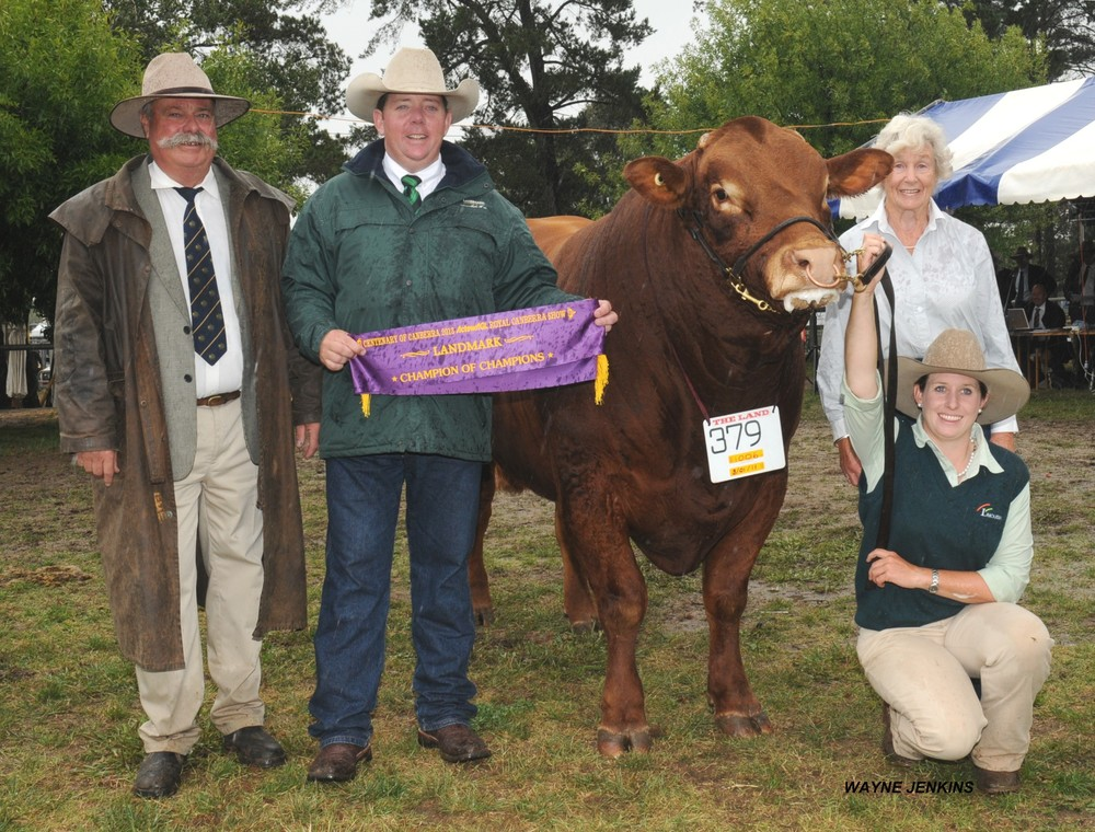 Longreach Grandiose - Champion of Champions, Canberra Royal 2013