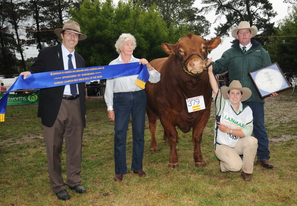 Longreach Grandiose Receiving Interbreed Champion Bull Canberra Royal 2013