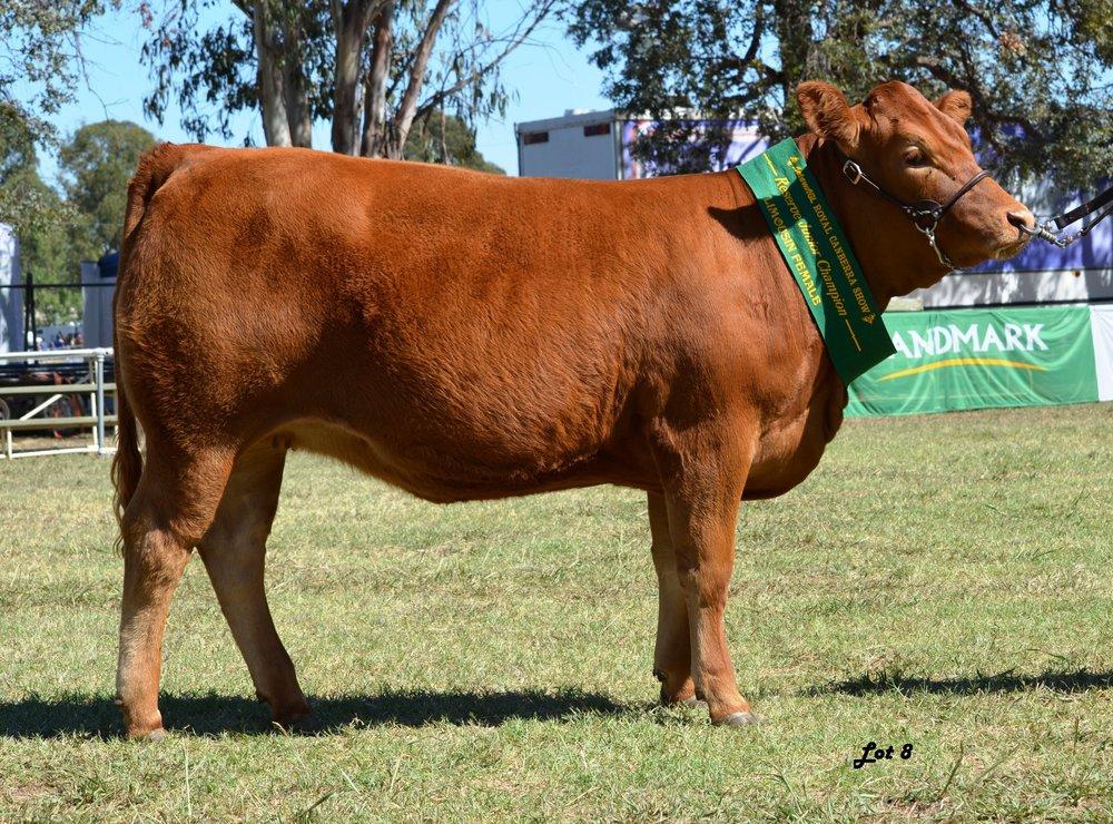 Longreach Sophia Kreation Reserve Junior Champion Female Canberra Royal 2016