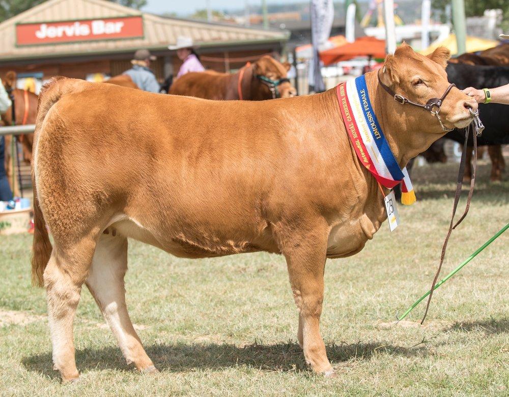 Longreach Maxine Madeleine Junior Champion Female Canberra Royal 2018