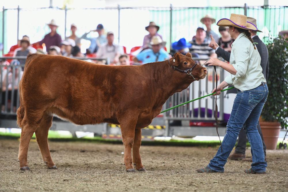 calf Lot 10.jpg