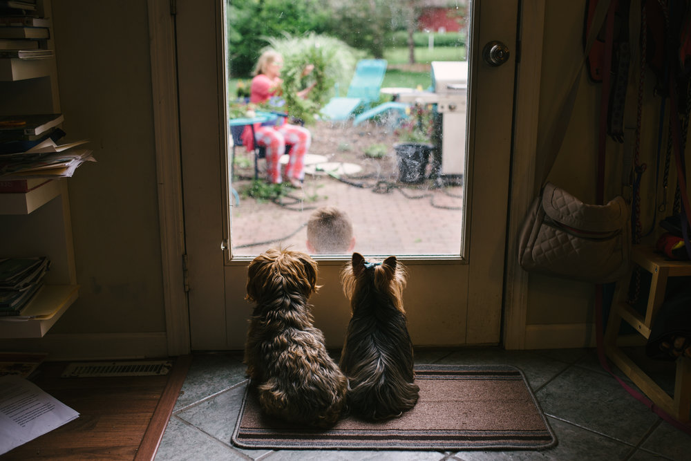 Puppies_Window-9682.jpg