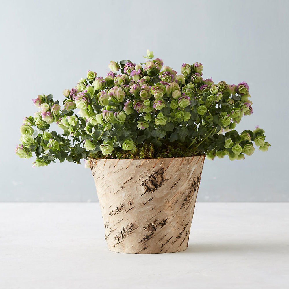 TERRAIN Ornamental Oregano $68