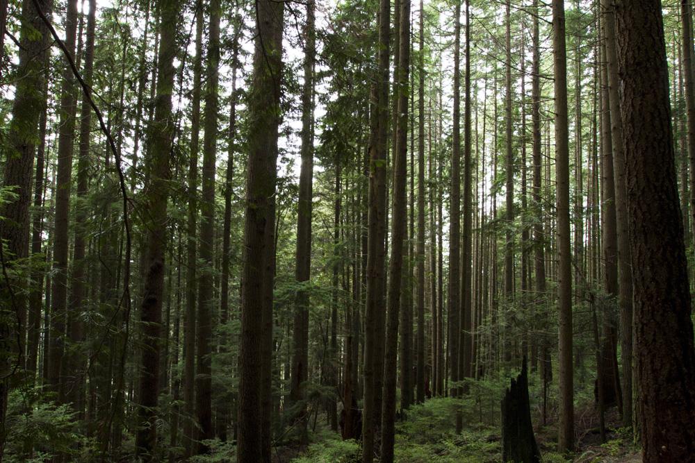 forestblog