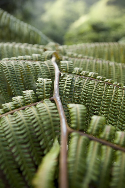 plants001.jpg
