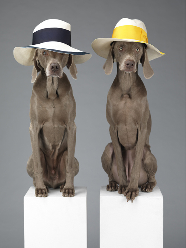 acne_william_wegman_chien_braques_de_weimar__324253025_north_545x.jpg