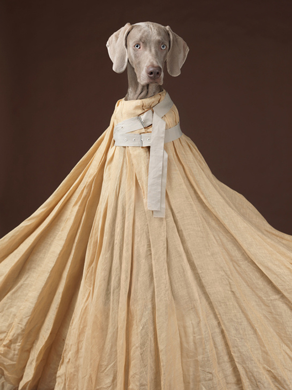 acne_william_wegman_chien_braques_de_weimar__875383542_north_545x.jpg