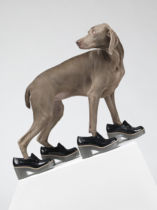 acne_william_wegman_chien_braques_de_weimar__306533165_north_545x.jpg