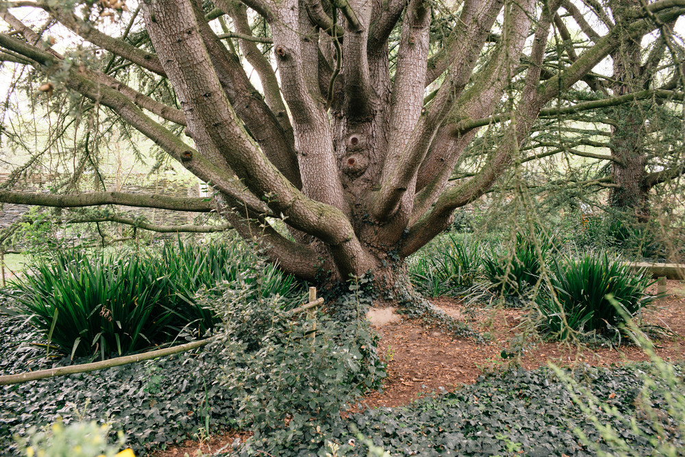 arboretum_angers