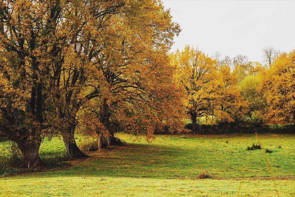 automne 1.jpeg