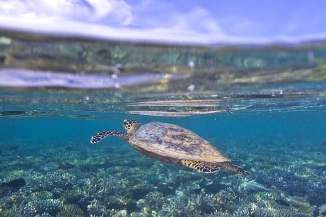 turtle14.jpg