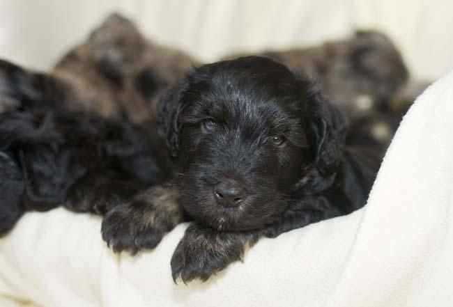 FTR-LRY-Puppies12.jpg