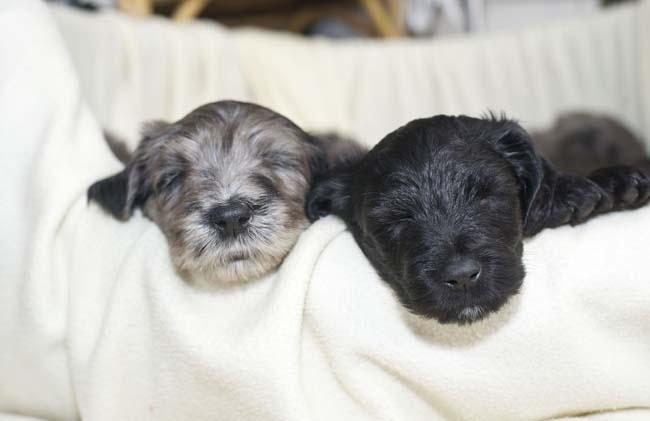 FTR-LRY-Puppies13.jpg
