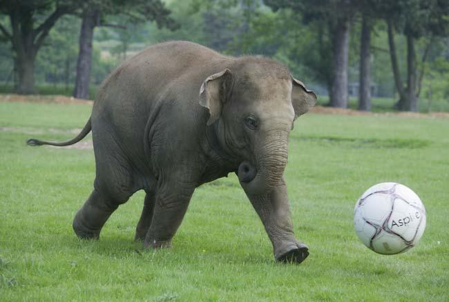 NWS-LRY-ElephantFootball9.jpg