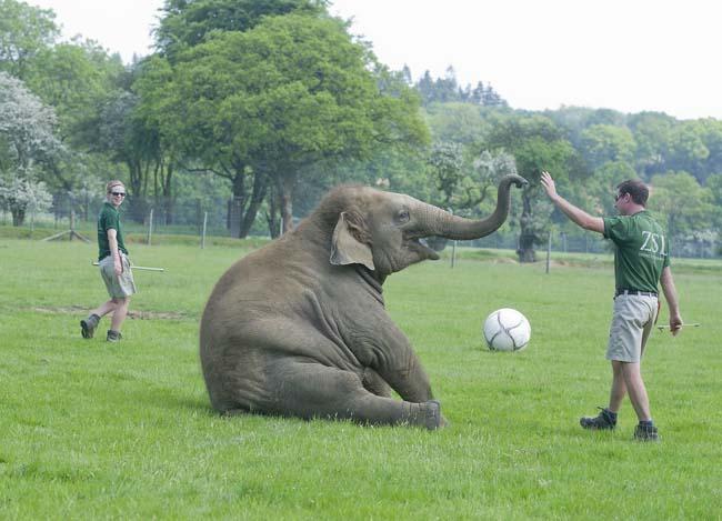 NWS-LRY-ElephantFootball13 copy.jpg