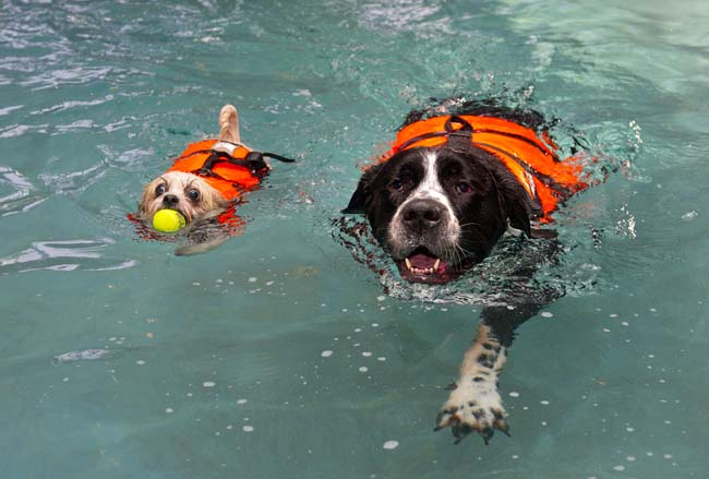 NWS-LRY-SwimmingDogs30.jpg