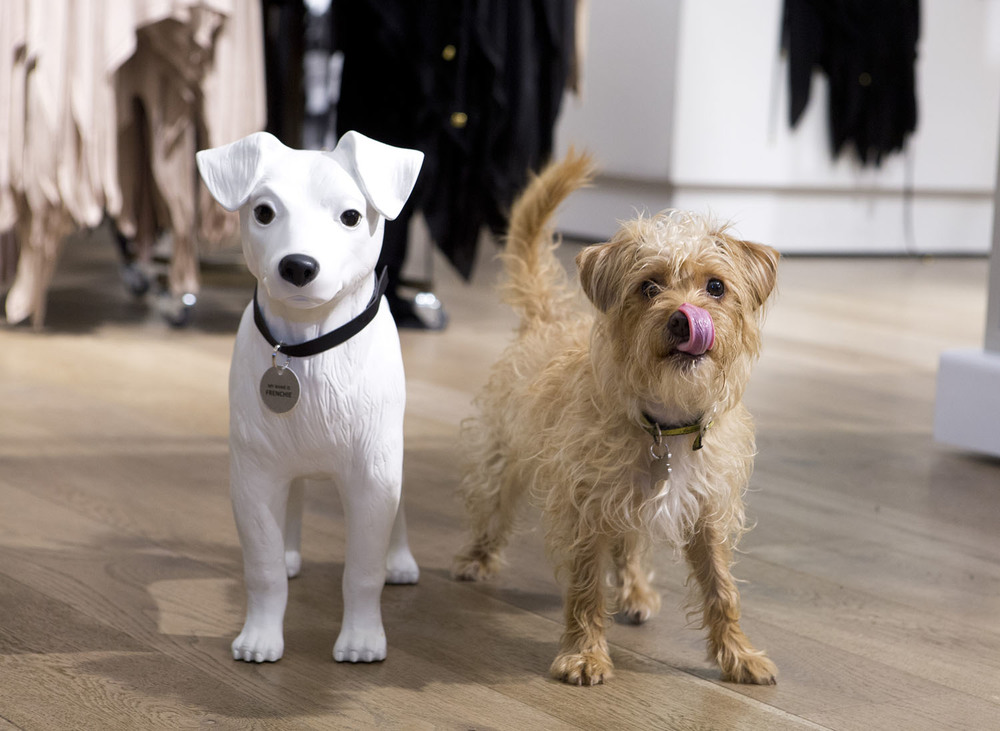 http://www.riverisland.com/styleinsider/blog/2015/12/raise-pounds-for-hounds-this-christmas-with-dogs-trust-and-river-island