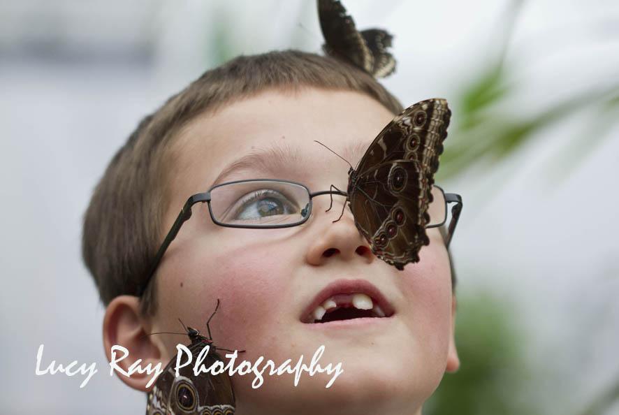 NWS-LRY-Butterflies11.jpg