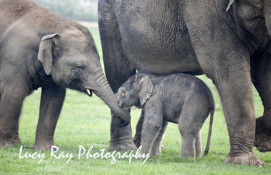 Baby Elephant6.JPG