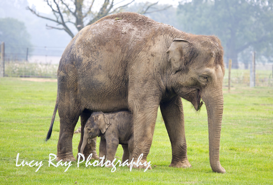 Baby Elephant7.JPG