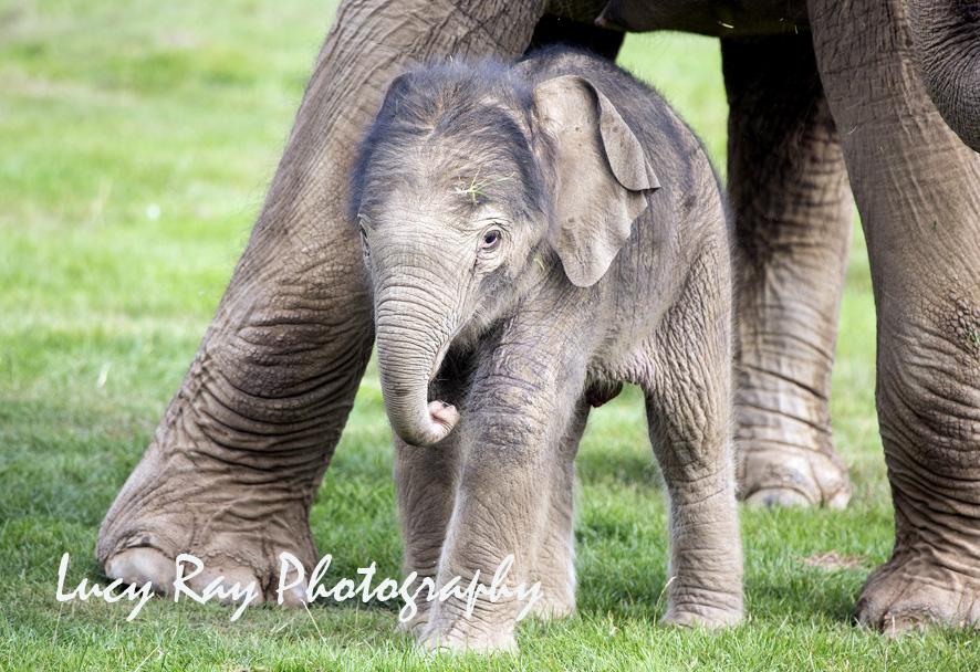Baby Elephant18.JPG