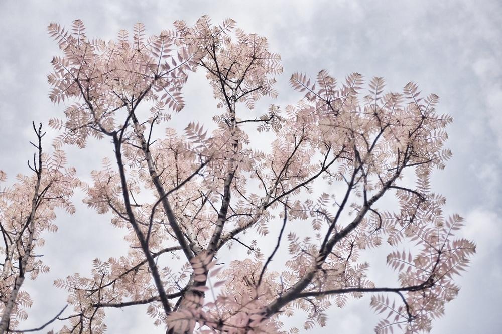 spring01.jpg