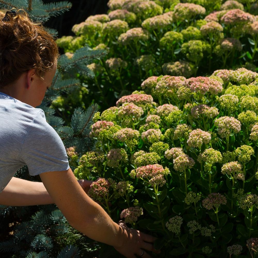 Positiv effekt:Blodtrykk, puls, konsentrasjonsevne og stressnivå påvirkes når vi er ute å steller i hagen