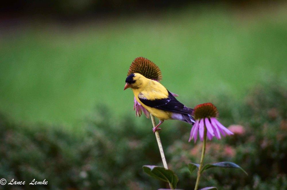 2013-08-19-home-shoot-birds--016.jpg