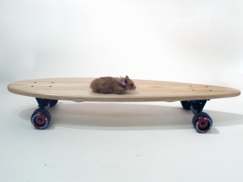 hamster_riding_Board.jpg