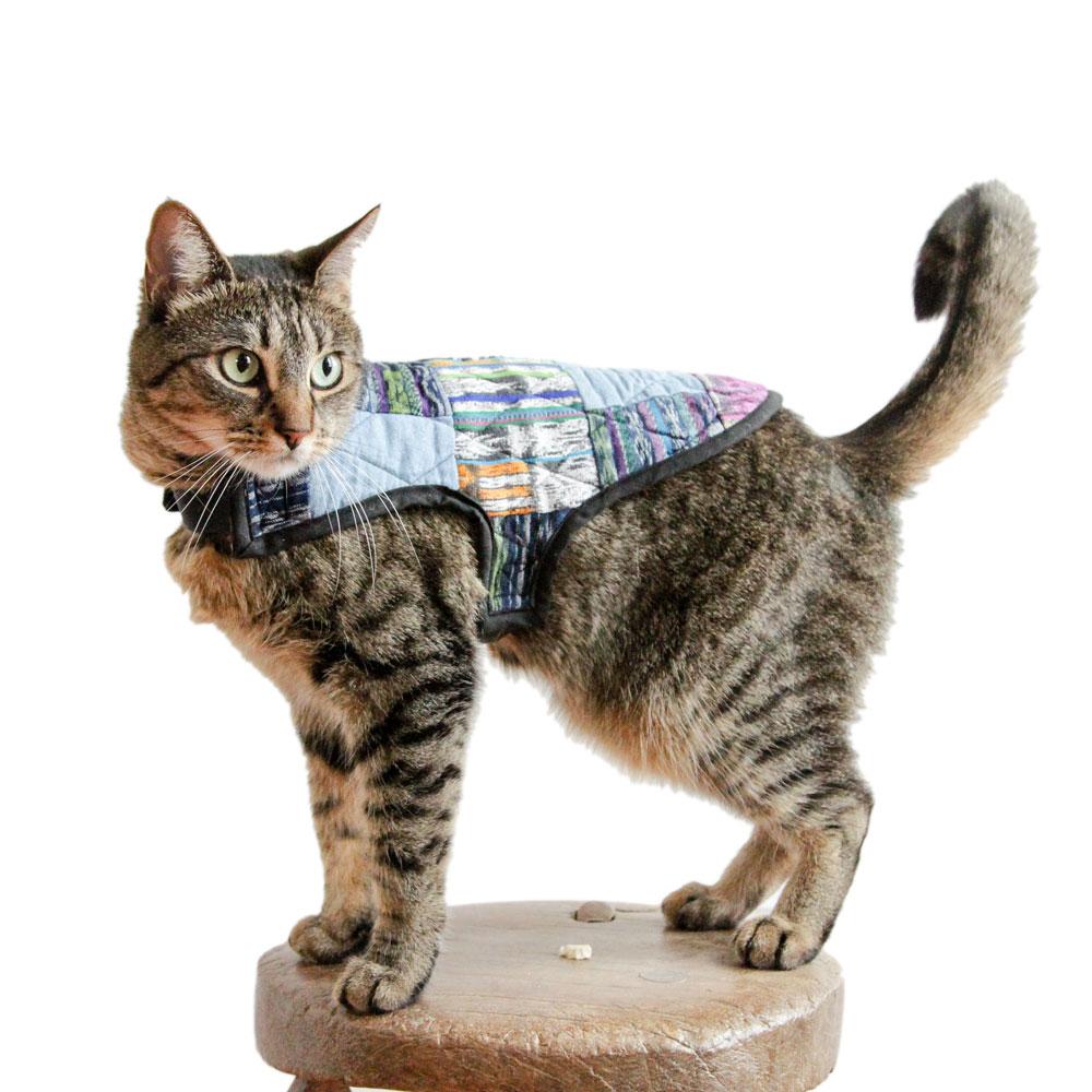 Cat in Pet Poncho.jpg
