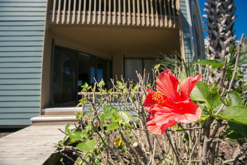 Hibiscus-f102-52.jpg