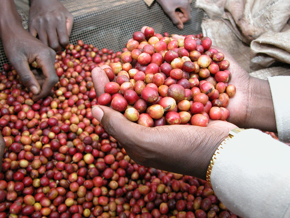 burundi cherries.jpg