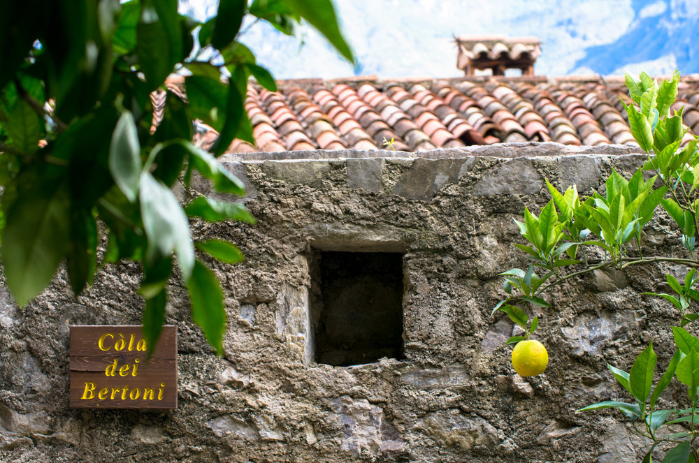 Lemon tree in Limone sul Garda