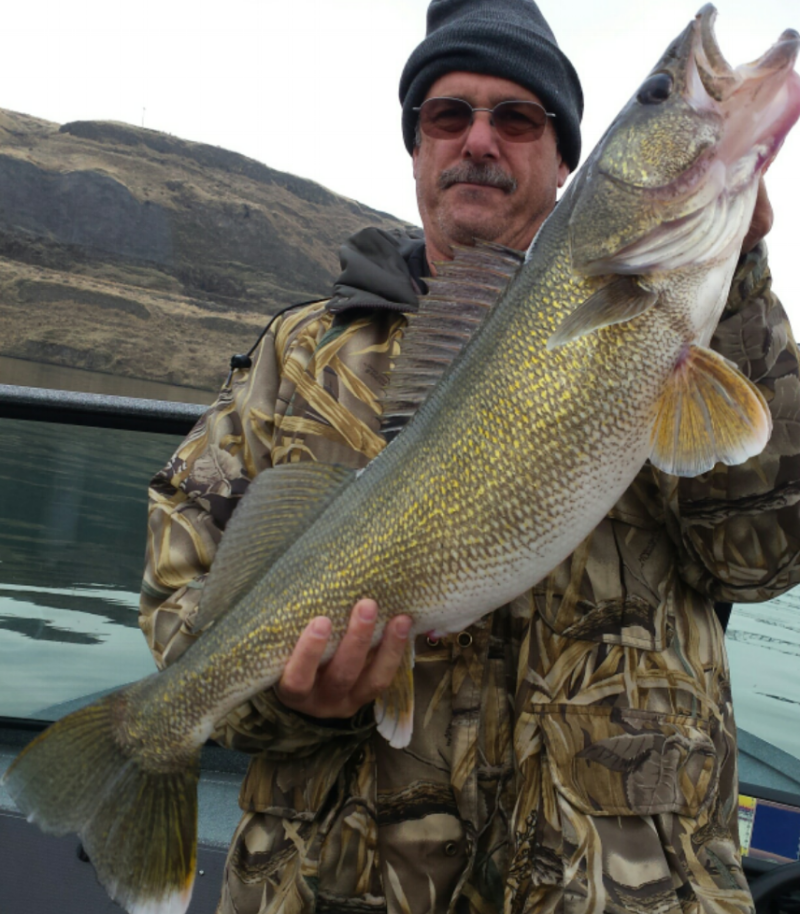 Joe M holds another huge Snake River walleye (released).  Nov 12.