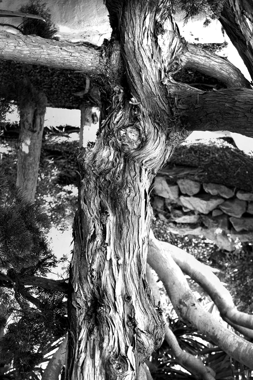 She Tree