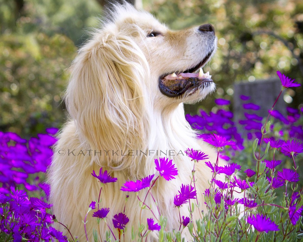 """""""BLISS'  16 X 20 .""""MY BEST FRIEND"""" CATEGORY, INTERNATIONAL PHOTO COMPETITION"""