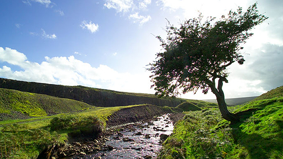 Tree-by-a-Stream.jpg