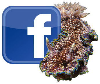 Facebooh nudi icon.png