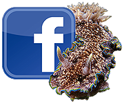 Facebooh nudi icon small.png