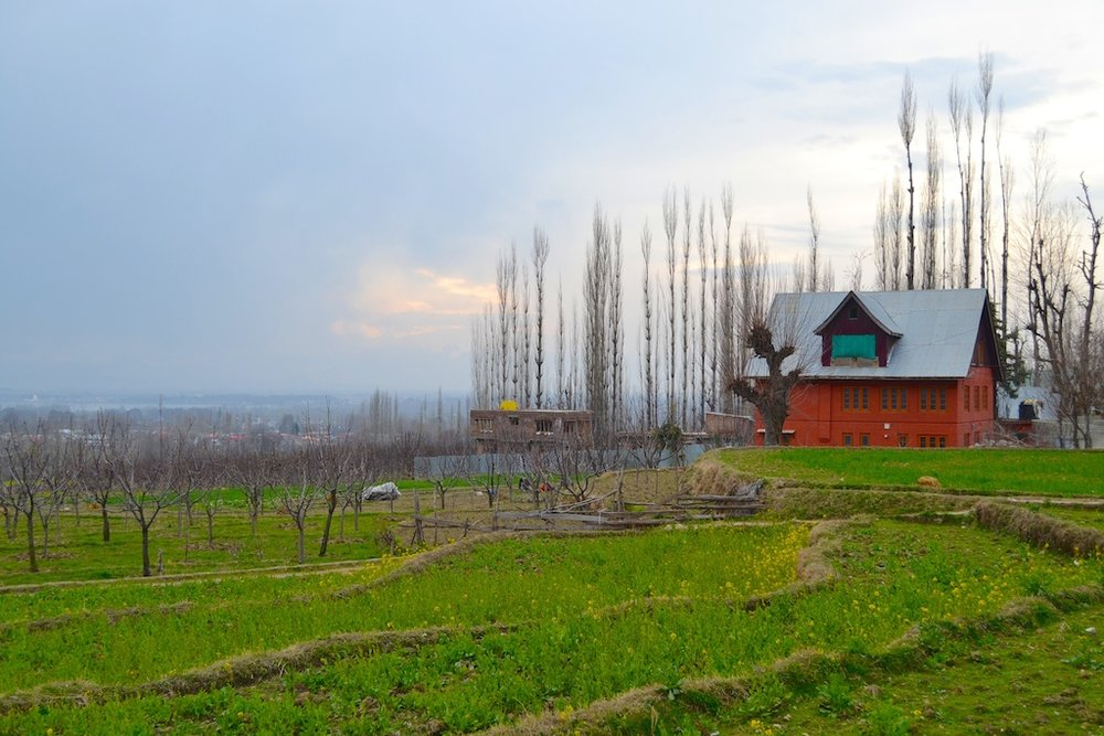 A farm on the way to Gulmarg