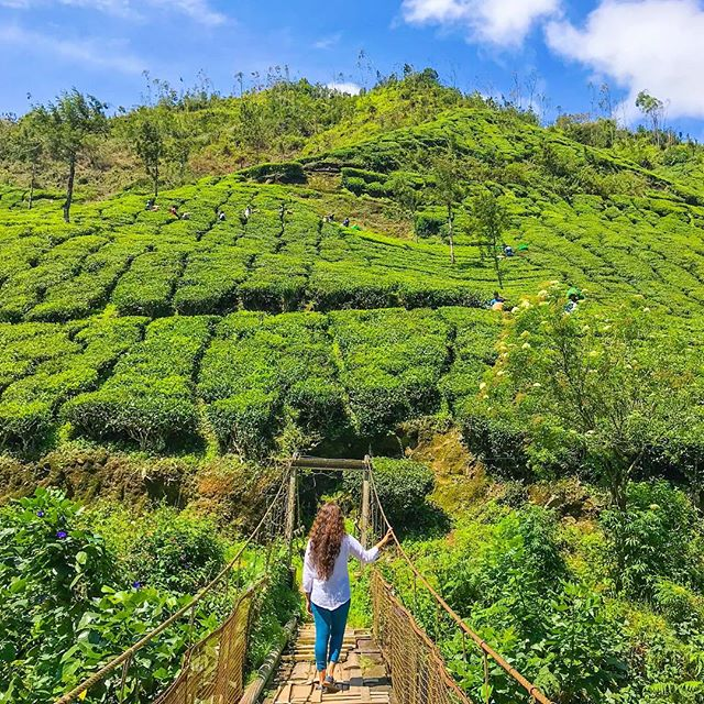 Monsoon wandering through Munnar! Trust me when I tell you that this is the best time to visit Kerala if you want to see and experience some of the greenest green on this planet! . . I can't seem to get enough of it and I would love to help you experience the same beauty. Get in touch with me to plan your magical monsoon journey through Kerala 🌸 . . #travel #instatravel #travelgram #india #indiatravel #indiatravelgram #kerala #momentsofmine #picoftheday #photooftheday #wanderbug #wanderlust #neverstopexploring #lifeofadventure #liveauthentic #traveldeeper #travelstoke #traveler #traveling #loveindia #lovetheworld #naturelovers #darlingescapes #dametraveler #beautifuldestinations #sheisnotlost #keralatourism #munnar #roamtheplanet