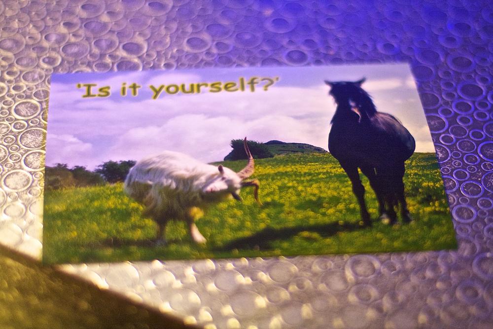 I got a cute card!