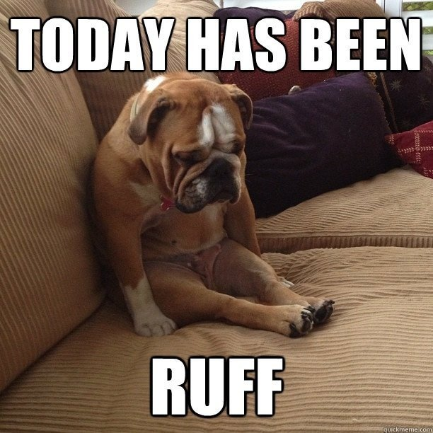 today-has-been-ruff-rough-dog-meme.jpg