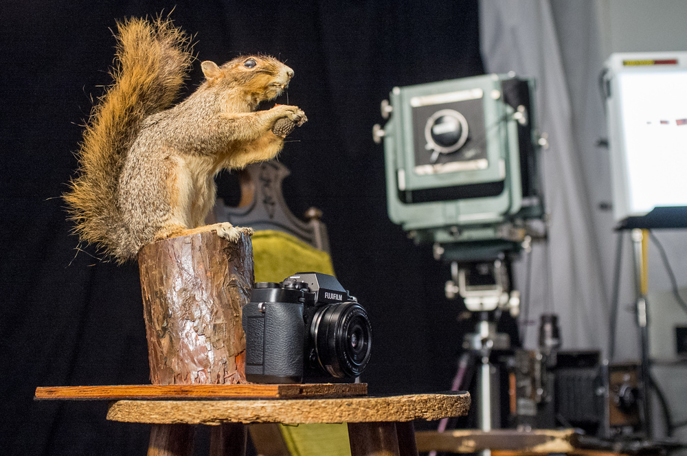 Carl, the taxidermy squirrel. I keep hearing Rick from The Walking Dead saying his son's name, which is also Carl. On a side note, some (a lot) of it was filmed in Atlanta.