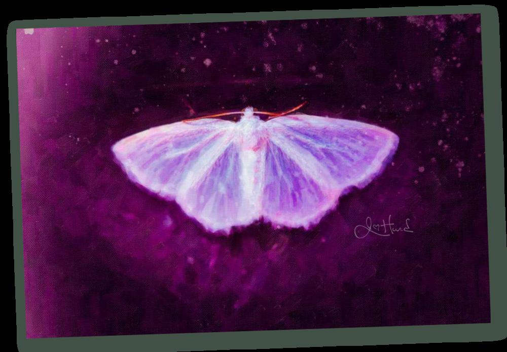 Moth-1.png