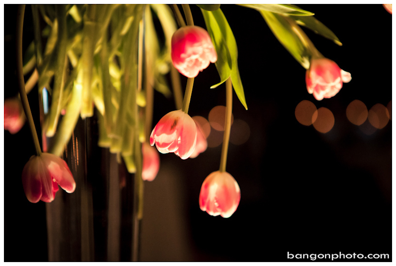 Bang-On Photography-Weddings-Fredericton-Saint John-Moncton-Quebec City-44.jpg
